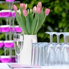 longcroft luxury cat hotel celebrations