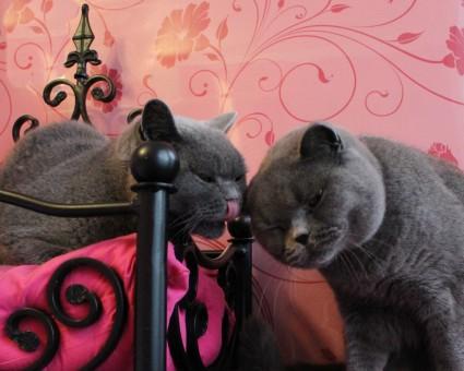 Longcroft kissing cats