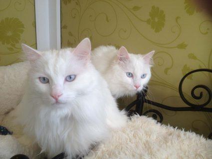Longcroft Luxury Cat Hotel Snowdrop Suite