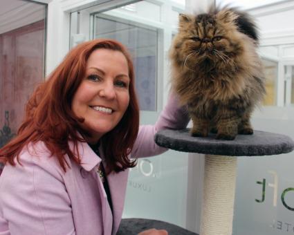 Longcroft cattery Braintree Essex