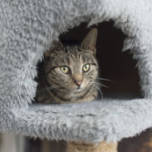 Longcroft Luxury Cat Hotel