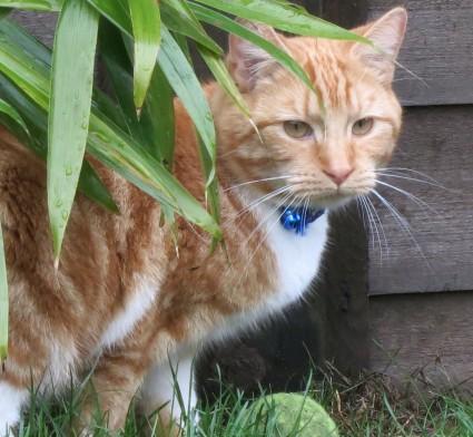 Blog 1 - Charlie cat Longcroft Cat Hotel Winchmore Hill Amesrham