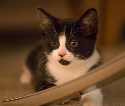 Blog 1 - Molly Kitten Longcroft Cat Hotel Winchmore Hill Amersham
