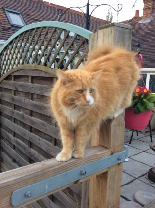 Longcroft Luxury Cat Hotel Fontwell Cattery Chichester Cat Diary
