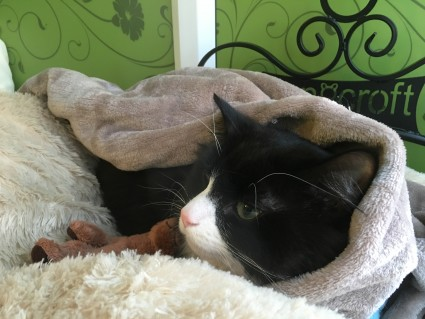 Blog 3 - Milo Sleepy Head Longcroft Cat Hotel Winchmore Hill