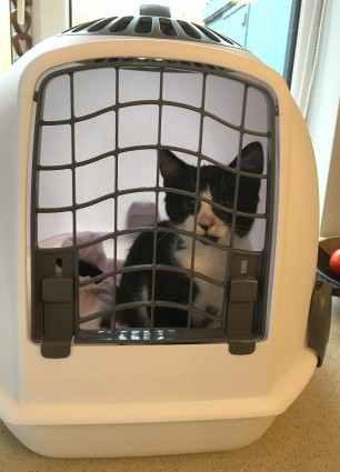 Blog 4 - Molly Igloo Longcroft Cat Hotel Winchmore Hill