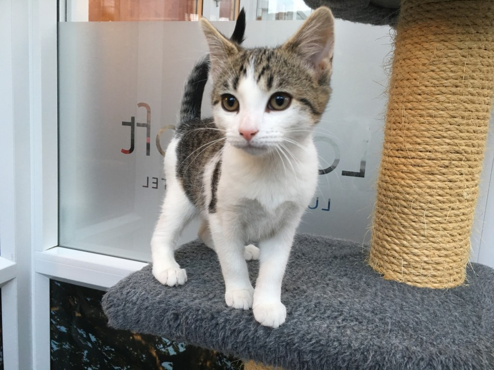 Blog 5 - Maisey Kitten Longcroft Cat Hotel Winchmore HIll
