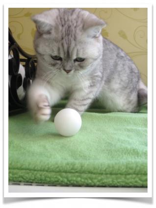 Mr Bentleys Blog | Kittens at Longcroft Luxury Cat Hotel