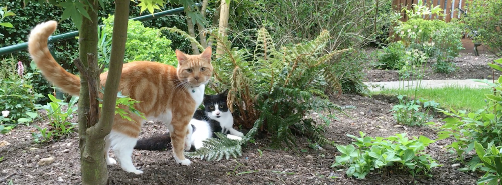 Blog 6 - Longcroft Cat Hotel Winchmore Hill - Charlie and Molly In garden