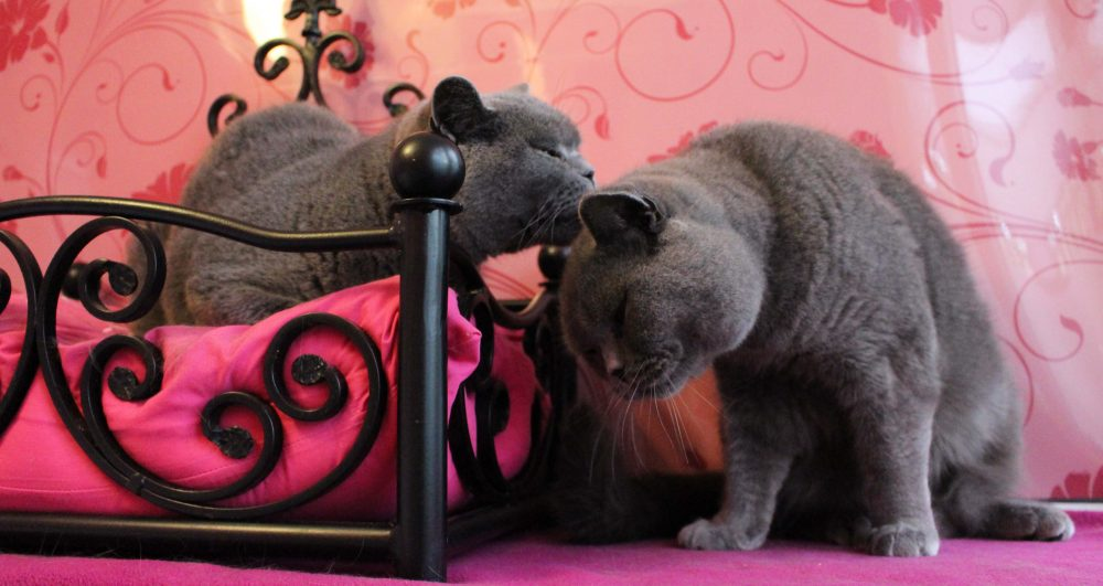 Win Valentines Competition Cat Hotel