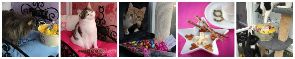 Easter Competition Longcroft Luxury Cat Hotel