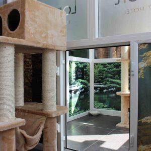 Longcroft Luxury Cat Hotel Margate, Kent