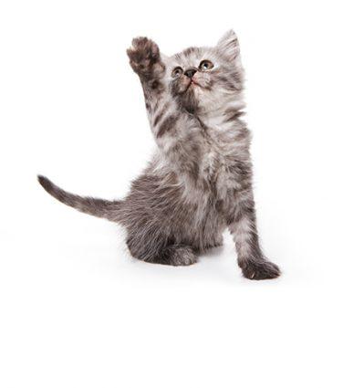 Cat Hotspot