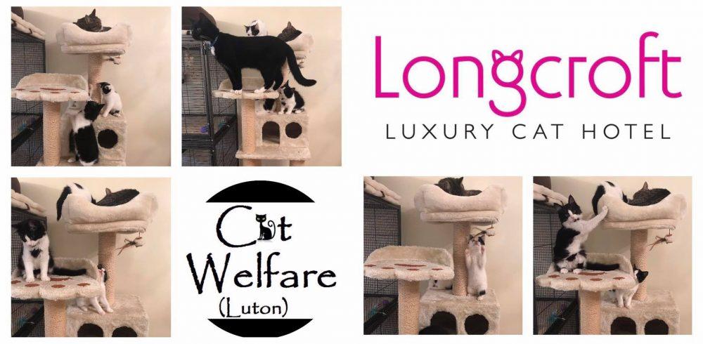 Cat Welfare Luton | Longcroft Luxury Cat Hotel Luton