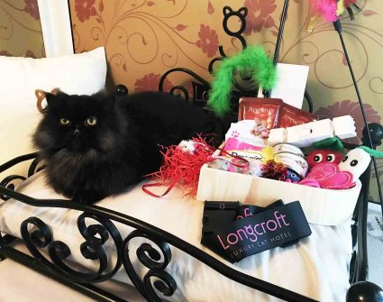 Christmas - Longcroft Luxury Cat Hotel