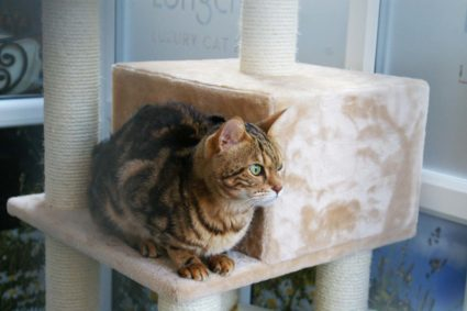 Longcroft Luxury Cat Hotel Flitwick Bedfordshire