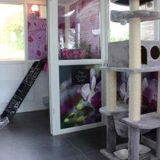 Orchid Suite Longcroft Romsey