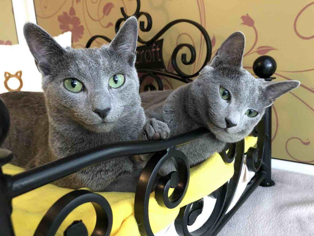 Quarantine Flexible Feline Care