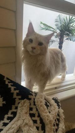 Longcroft Luxury cat Hotel Winner