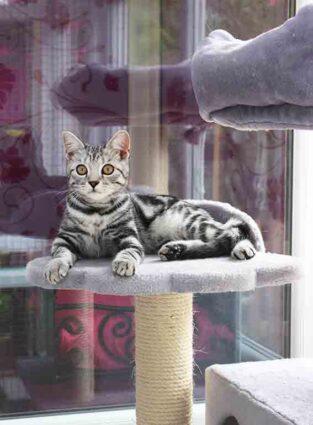 Longcroft Luxury Cat Hotel Four Marks East Hampshire