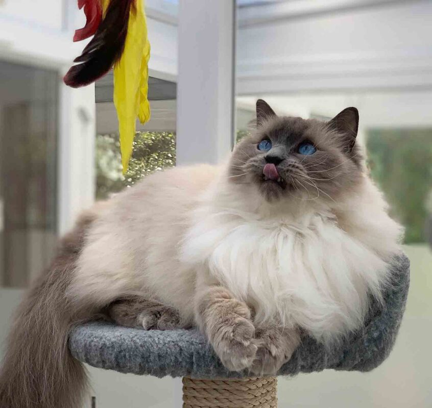 Longcroft Luxury Cat Hotel Four Marks East Hampshire opening